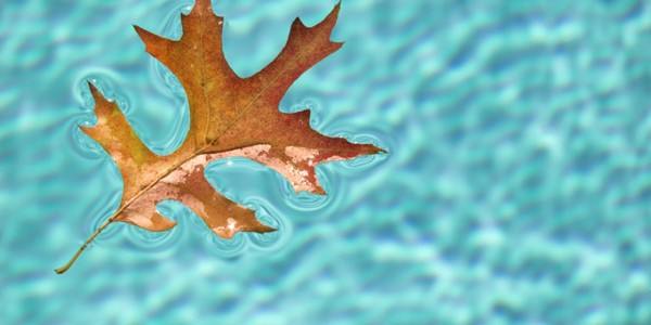 fall-pool-image
